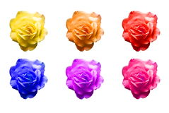 Pop art roses 2. Different colored pop art style roses Stock Image
