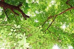 Pop art verde de Ásia da natureza da árvore Fotografia de Stock Royalty Free