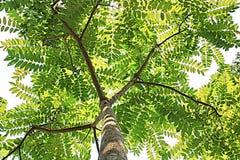 Pop art verde de Ásia da natureza da árvore Fotos de Stock