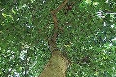 Pop art verde de Ásia da natureza da árvore Foto de Stock