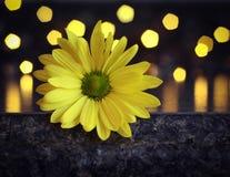 Pop av guling med bokeh Royaltyfri Foto