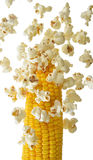 Pop Corn that fly away from the corn cob Stock Images