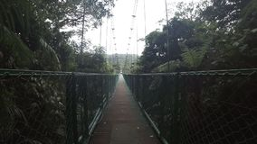 Walking on hanging bridge at the rainforest in Costa Rica. POP view walking on hanging bridge at natural rainforest in Costa Rica, misty stock video