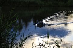 Popasu dozownika łódź Fotografia Stock