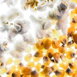 Popcorn και πυρήνες Στοκ φωτογραφία με δικαίωμα ελεύθερης χρήσης