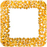 Popcorn kernel square frame Royalty Free Stock Photo