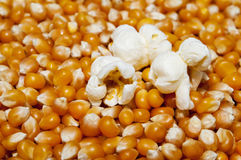 Popcorn popped on kernels Stock Photo