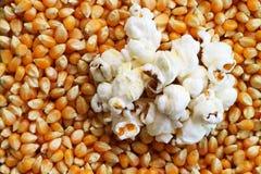Popcornkerne gekocht, Hintergrund Lizenzfreie Stockfotografie