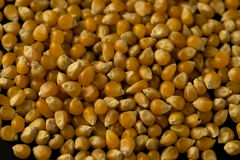 Popcornsamenabschluß herauf Mustermakro Lizenzfreie Stockfotografie