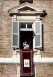 Pope Francesco pojawiać się przy okno Grudzień 8, 2014 poczęcie niepokalany zdjęcia royalty free