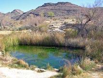 Wiosna wśród popiółu Łąkowego Krajowego rezerwata dzikiej przyrody, Nevada. Obraz Stock