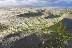 popiół plażowa trawa Zdjęcia Royalty Free