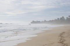 Popiół przy plażą Zdjęcia Royalty Free