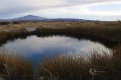 popiółu duży łąk Nevada wiosna Obraz Royalty Free