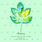 Popiółu liść z akwarela wzorem dla jesień projekta Obrazy Royalty Free