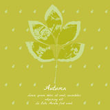 Popiółu liść z akwarela wzorem dla jesień projekta Zdjęcie Stock