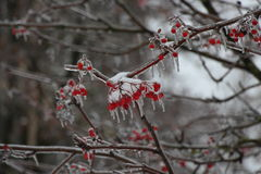 Popiół w lodzie Fotografia Royalty Free