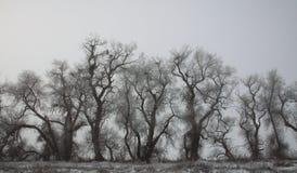 Popielaci zim drzewa Zdjęcia Royalty Free