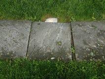 Popielata kamie? p?ytka z ?wiat?em, liszaj i zielona trawa zdjęcia royalty free
