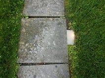 Popielata kamie? p?ytka z ?wiat?em, liszaj i zielona trawa zdjęcie royalty free