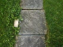 Popielata kamie? p?ytka z ?wiat?em, liszaj i zielona trawa obraz stock