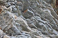 popielata kamienna tekstura Zdjęcia Stock