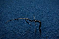 Popielata tracz pozycja w zmroku - błękit pluskocząca woda podkreślająca światłem słonecznym obraz royalty free