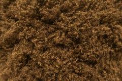 Popielatego, Ciemnego Brown Fox Wilczego futerka, Naturalny, Zwierzęcy Halny przyrody pojęcie, i styl dla tła, tekstur i tapety, zdjęcie royalty free