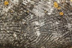 Popielaty brązu kamienia tekstury tło Obrazy Stock