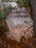 Popielaty gejzer Obramiający drzewem Fotografia Royalty Free