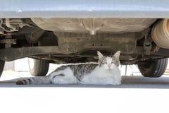 Popielaty i biały kot kłaść pod samochodem Zdjęcia Stock
