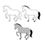Popielaty konia set Zdjęcia Royalty Free