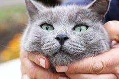 Popielaty kot bezbronny, ochraniający zwierzę obrazy royalty free