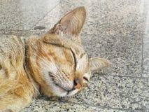 Popielaty kota dosypianie Zdjęcie Stock