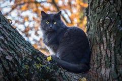 Popielaty kota obsiadanie na drzewie Zdjęcia Royalty Free
