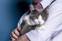 Popielaty kota obsiadanie na mężczyzna rękach obrazy royalty free