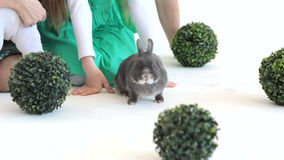 Popielaty królik w studiu z unrecognizable dzieciakami zbiory wideo