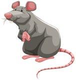 Popielaty szczur royalty ilustracja