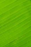 Popiera bananowy liść tekstury tło Fotografia Royalty Free