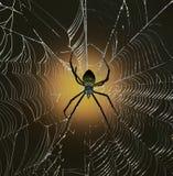 Popierający Ogrodowy pająk Fotografia Royalty Free