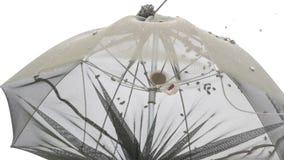 Popilia Japonica insekta infestation zbiory wideo