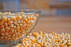 Popkornów nasiona w pucharze Zdjęcie Stock