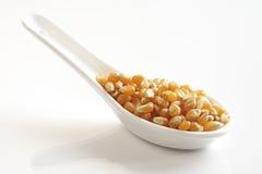 Popkorn kukurydza Fotografia Stock