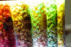 Popkorn w gablocie wystawowej różni kolory obraz stock