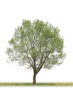 Poplar Stock Photography