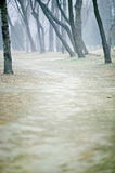Poplar. And road in forest with fog Royalty Free Stock Images