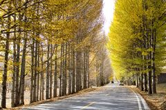 Poplar. This is poplars in altiplano chanxi stock photography