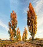 Poplar alley Stock Photography