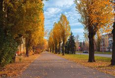 An poplar autumn tree alley on cloudy sky background. City downtown tree asphalted alley. Cloudy weather stock image