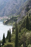 Poplar Coast. The lake Garda shoreline around Limone. Steep mountains cascade to the waters edge. Tall Poplar trees add another, attractive, vertical dimension stock photos